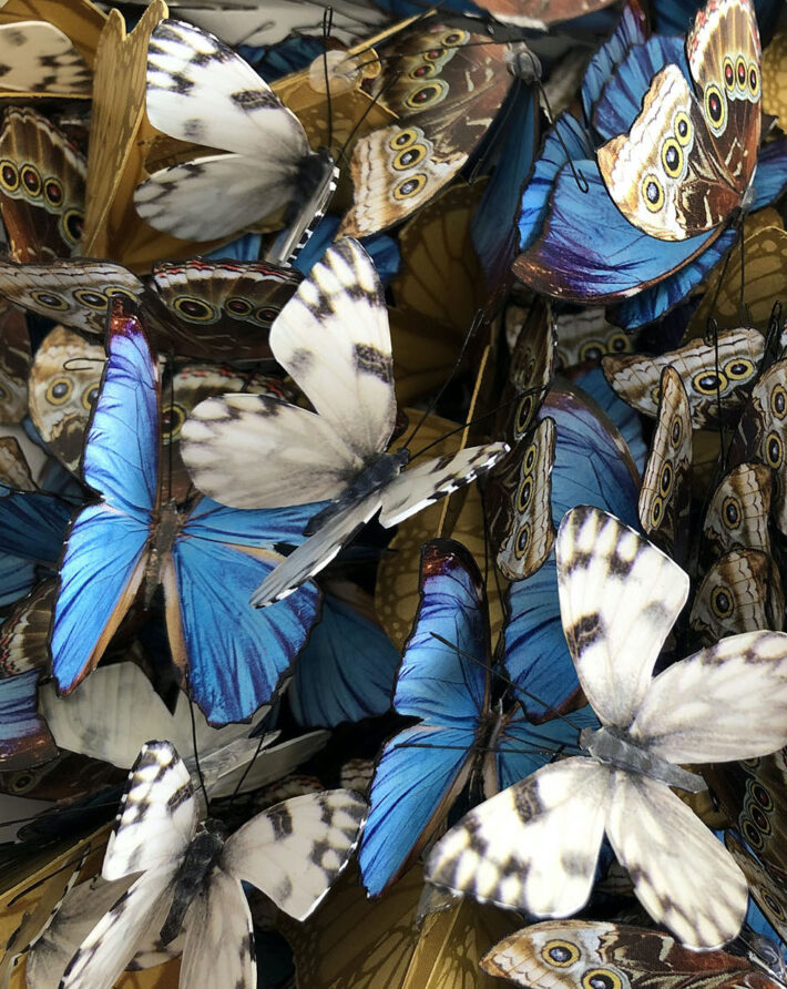 A close up of butterflies by Guilded artist Daniel Byrne
